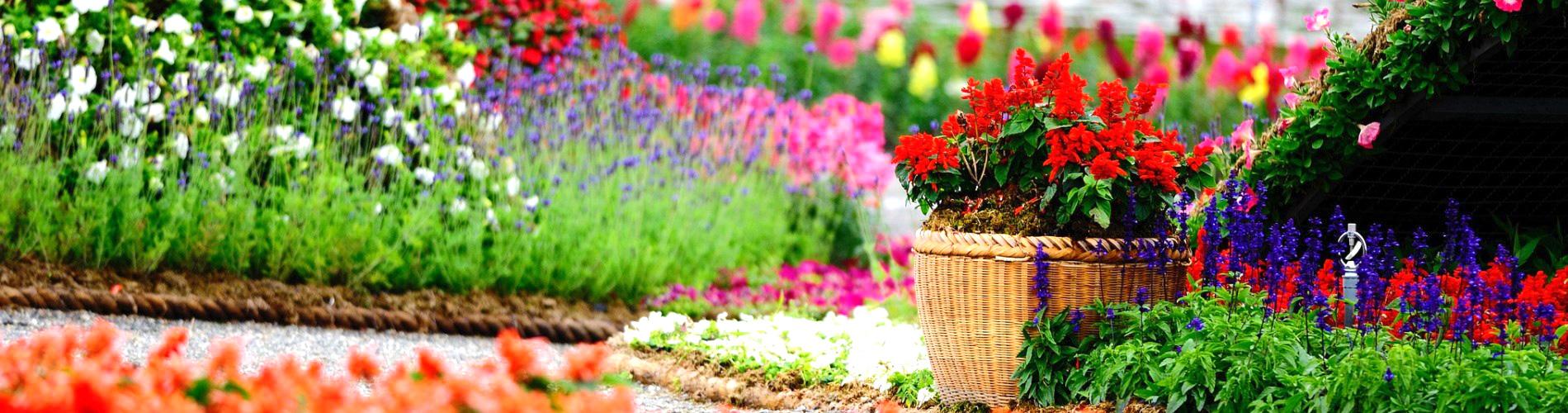 Progettazione e realizzazione giardini privati e pubblici for Progettazione paesaggistica