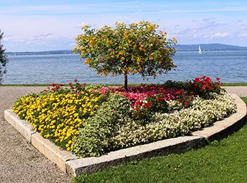 Progettazione e realizzazione giardini privati e pubblici for Progettazione aiuole